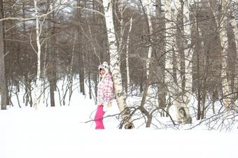 雪の中の樺