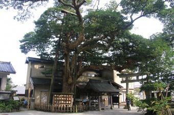 「御霊神社」にある木